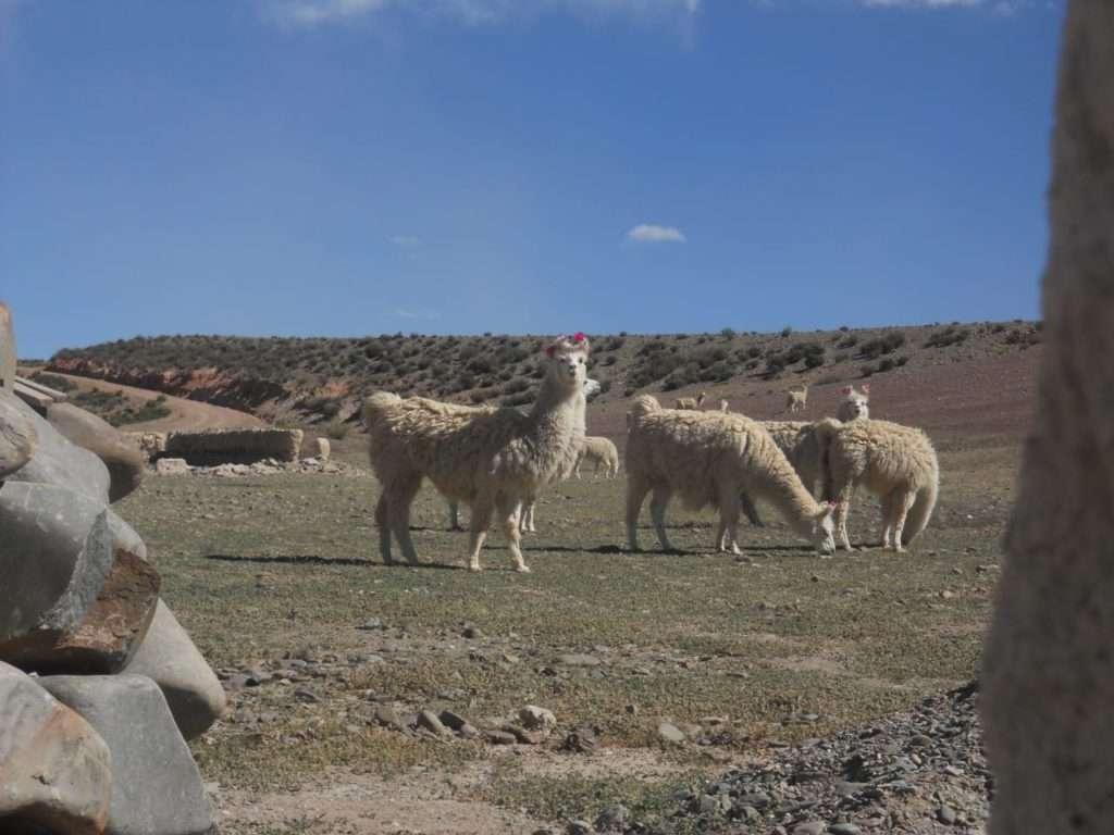 Jujuy - North West Argentina