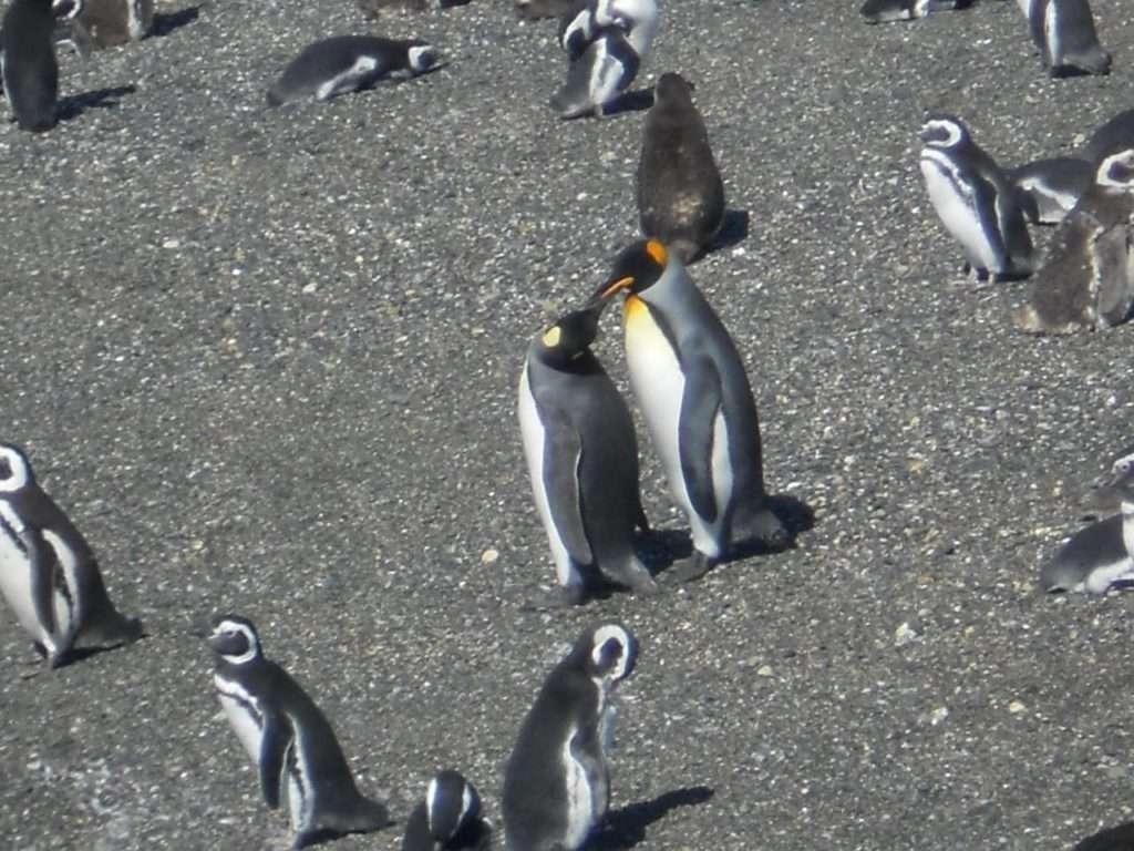 Penguins of Patagonia